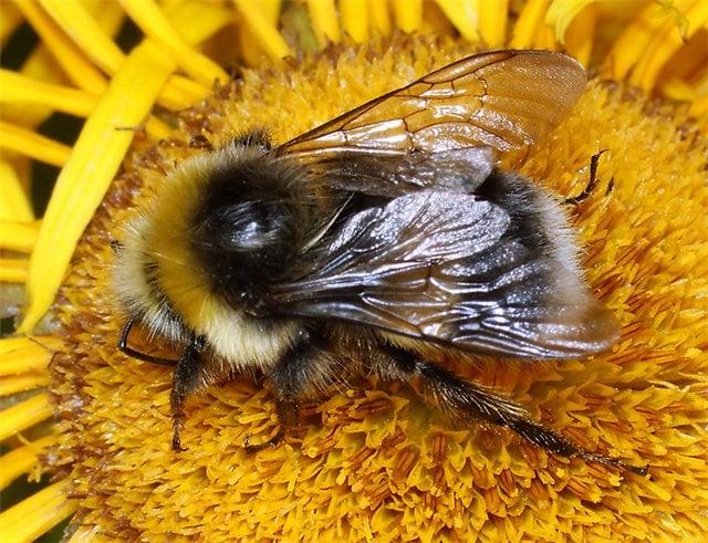 Укус пчелы, осы у ребенка