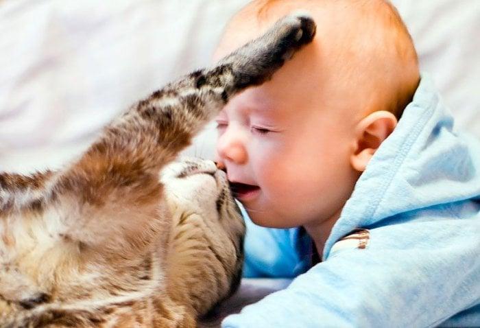 Аллергия на кошку у ребенка лечение