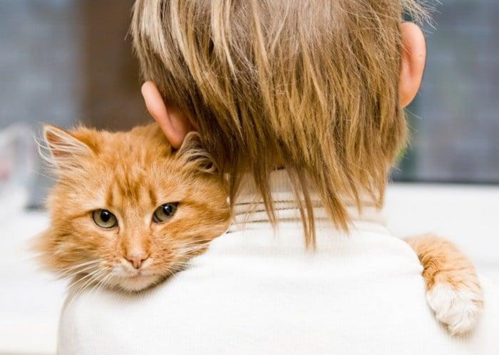 Признаки аллергии на кошек у детей