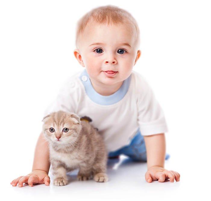 Аллергия на кошку у ребенка