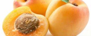 абрикосы при грудном вскармливании