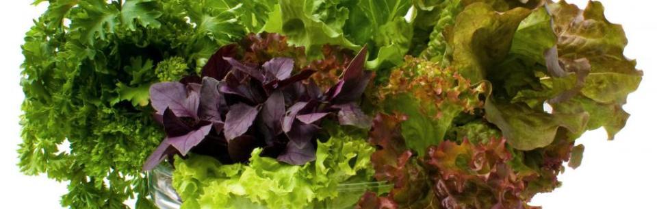зелень для кормящей мамы