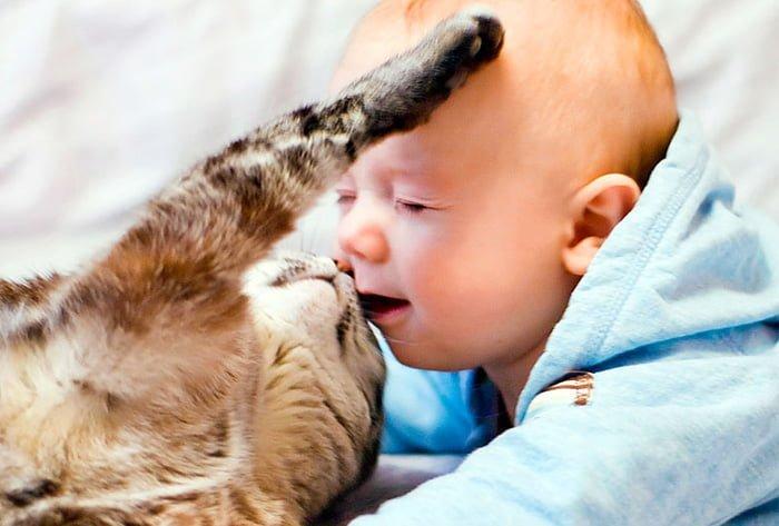 грудничок и кошка