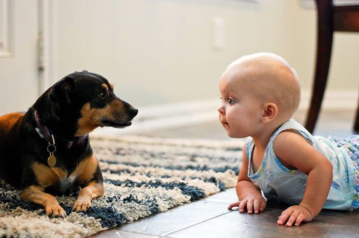 аллергия на шерсть домашних животных у новорожденного