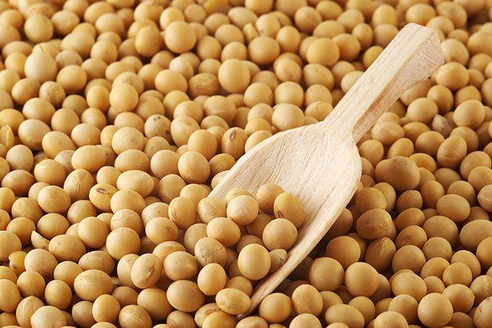 зерна сои