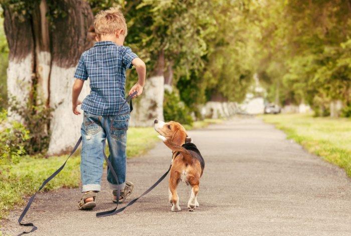 dog walking with boy