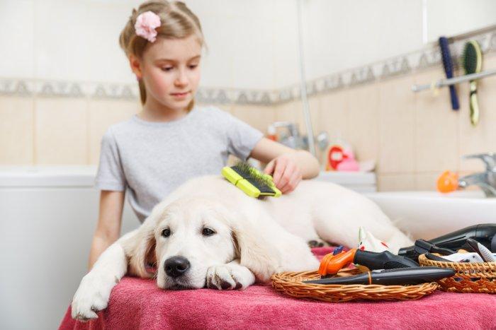 Как выбрать собаку ребенку