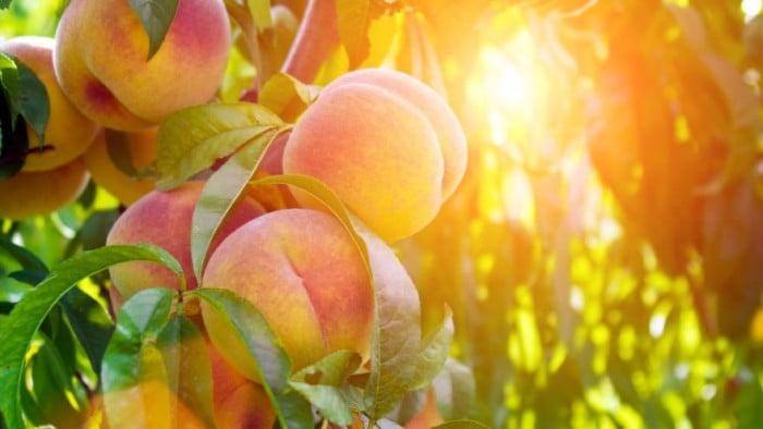 Польза и вред персиков ребенку