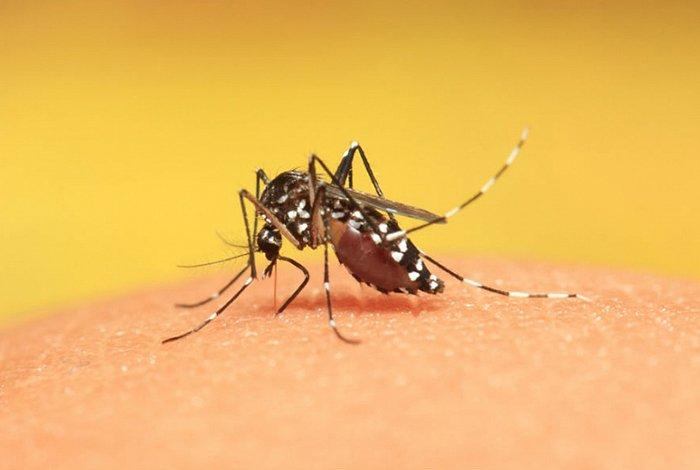 Укусы комаров у ребенка