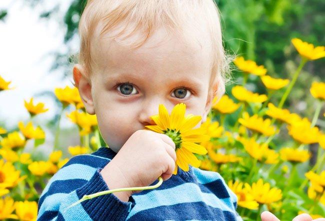 Аллергия на пыльцу у детей