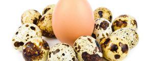 куриные и перепелиные яйца при грудном вскармливании