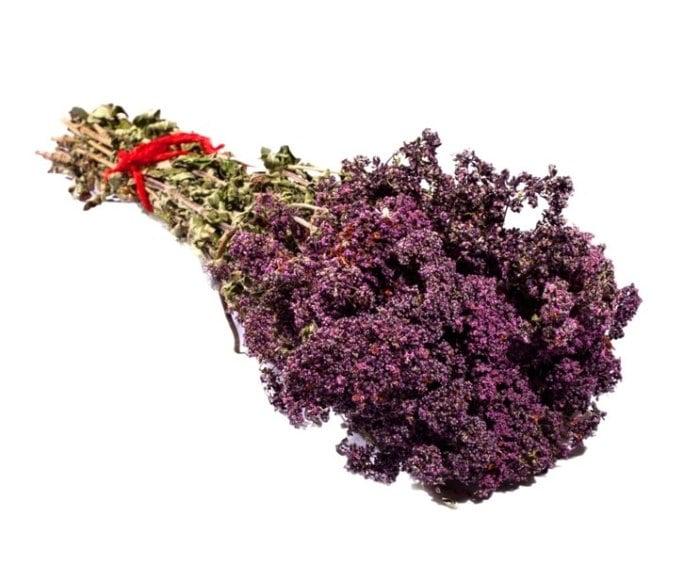 полезные свойства цветов душицы при грудном вскармливании