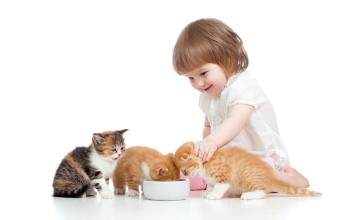 глисты у детей при контакте с животными