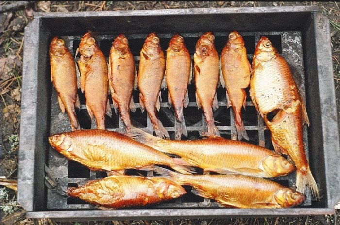 холодное копчение рыбы