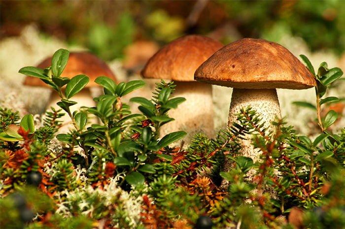грибы при грудном вскармливании