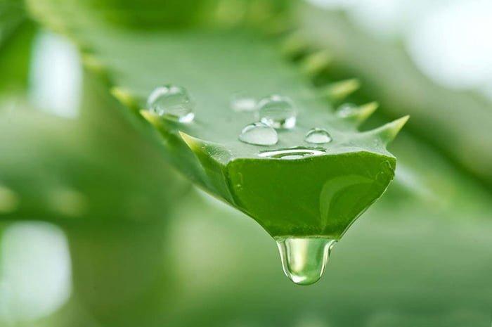 растение для лечения насморка у взрослых и детей