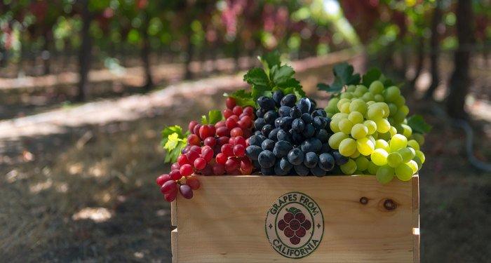 Стоит ли давать виноград детям