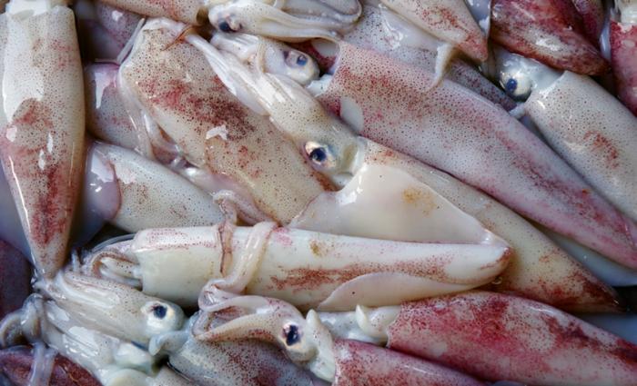 Как выбрать кальмары